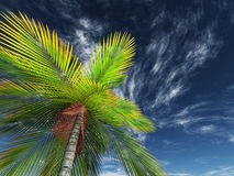 3D render of looking up a palm tree towards the sky Royalty Free Stock Photography