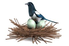 3d render of magpie with nest. Realistic 3d render of magpie with nest Royalty Free Stock Photo