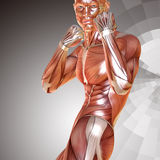 3d render of a male muscular anatomy in defense pose Royalty Free Stock Photography