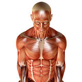 3d render of a male muscular anatomy Stock Images