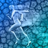 3D medical background with male figure running with skeleton Stock Photos