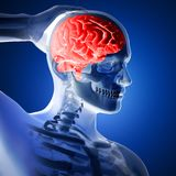 3D render of a medical figure with brain highlighted Royalty Free Stock Photo