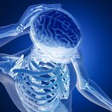 3D render of a medical figure with brain highlighted Stock Photography