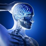 3D render of a medical figure with brain highlighted Royalty Free Stock Images