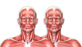 3d render of a medical figure with facial expression showing fr Royalty Free Stock Image