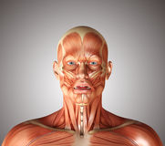 3d render of a medical figure with fashial expression showing fr Stock Photos