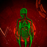 3d render medical illustration of the adrenal Royalty Free Stock Photos