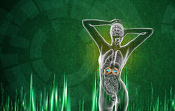 3d render medical illustration of the adrenal Royalty Free Stock Photography