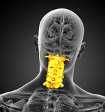 3d render medical illustration of the cervical spine Stock Photo