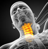 3d render medical illustration of the cervical spine Stock Images