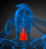 3d render medical illustration of the cervical spine Royalty Free Stock Images