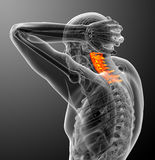 3d render medical illustration of the cervical spine Stock Photos