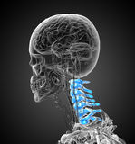 3d render medical illustration of the cervical spine Stock Photography