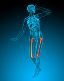3d render medical illustration of the femur bone Royalty Free Stock Image