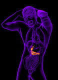 3d render medical illustration of the gallblader and pancrease Royalty Free Stock Photo