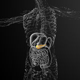 3d render medical illustration of the gallblader and pancrease Royalty Free Stock Images