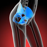 3d render medical illustration of the hip bone Stock Photos