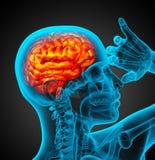 3d render medical illustration of the human brain Stock Images