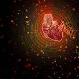 3d render medical illustration of the human heart Royalty Free Stock Photos