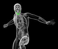 3d render medical illustration of the human jaw bone Stock Photo