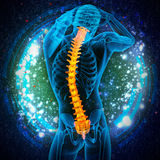 3d render medical illustration of the human spine Royalty Free Stock Image