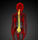 3d render medical illustration of the human spine Stock Photo