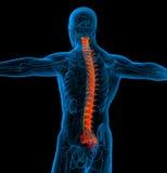 3d render medical illustration of the human spine Stock Photo
