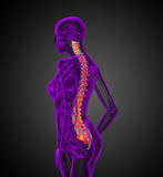 3d render medical illustration of the human spine Stock Photos