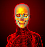 3d render medical illustration of the human sull Stock Photos