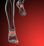 3d render medical illustration of the midfoot bone Royalty Free Stock Image