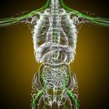 3d render medical illustration of the nerve system Royalty Free Stock Image