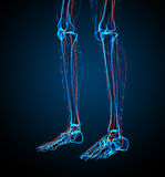 3d render medical illustration of the nerve system Royalty Free Stock Photography