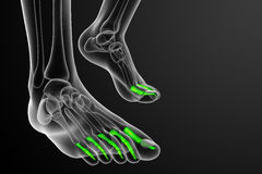 3d render medical illustration of the phalanges foot Stock Photos