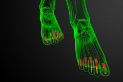3d render medical illustration of the phalanges foot Royalty Free Stock Image