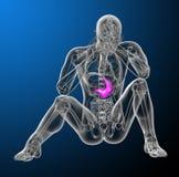 3d render medical illustration of the stomach Stock Image