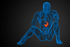 3d render medical illustration of the stomach Stock Photo
