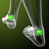 3d render medical illustration of the talus bone Stock Image