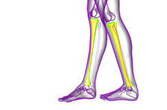 3d render medical illustration of the tibia bone Royalty Free Stock Photos