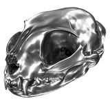 3D render of metallic Cat Skull royalty free illustration