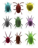 3d render of mites Royalty Free Stock Photo