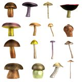 3d render of mushrooms Royalty Free Stock Photos