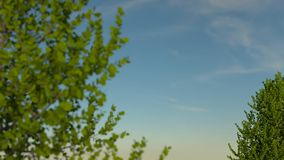 Out of focus tree branches in front of sky, with in-focus tree at the background. Stock Images