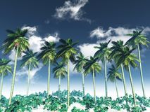 3D palm tree landscape. 3D render of a palm tree landscape against a blue sky with white clouds Royalty Free Stock Photos