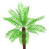 3d render of palm tree royalty free illustration