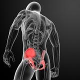 3d render pelvis under the X-rays Stock Photo