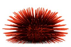 3d render of sea urchin Royalty Free Stock Photos