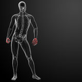 3d render skeletal hand Royalty Free Stock Photography