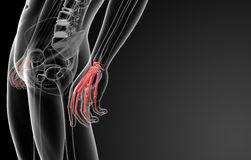 3d render skeletal hand Stock Photography