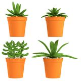 3d render of succulents Royalty Free Stock Photo