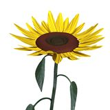3d render of sunflower Royalty Free Stock Photos